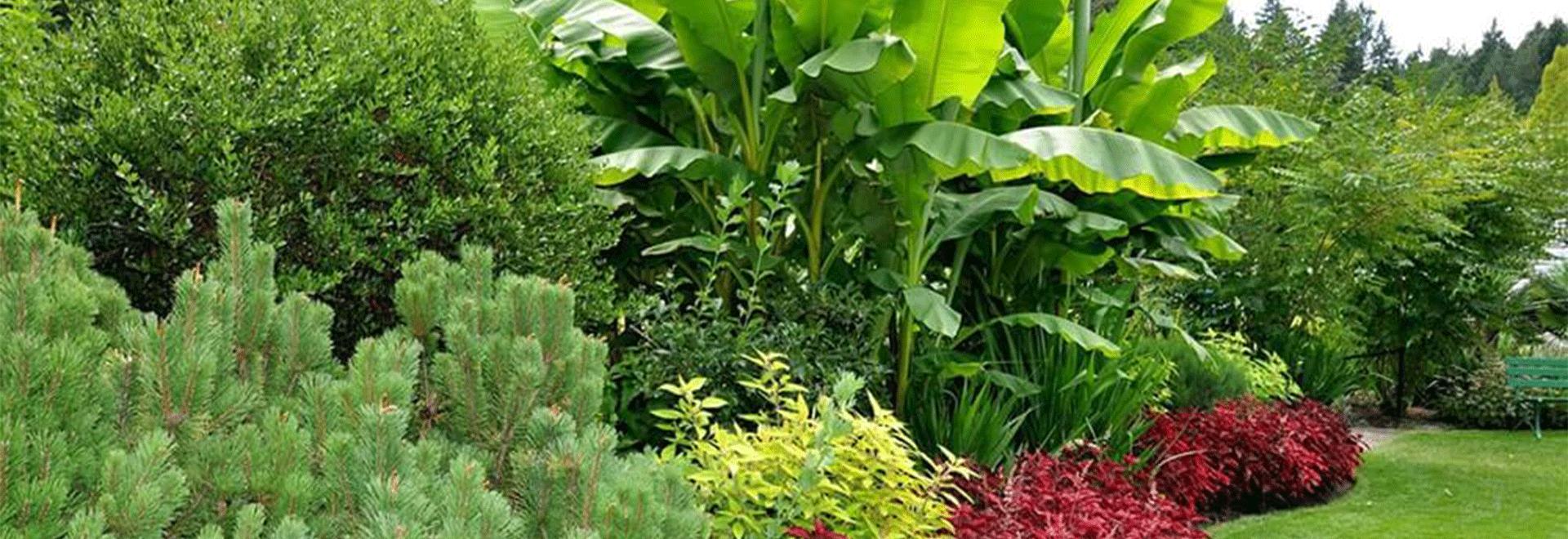 bitki-haklari65-10.png